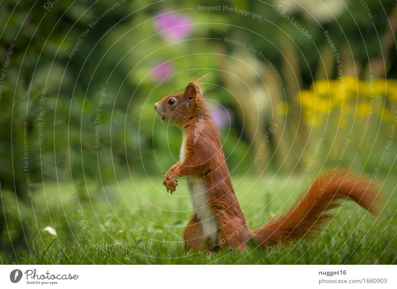 Nature Green Animal Forest Yellow Meadow Grass Garden Brown Orange Park Wild animal Authentic Walking Observe Cute