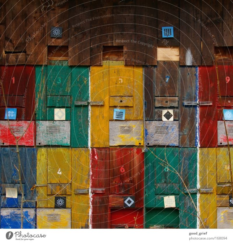 Christmas calendar for daredevils Colour photo Multicoloured Exterior shot Structures and shapes Deserted Day daylight Light Art Plant Grass Bushes Wild plant