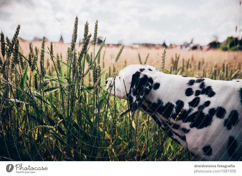 Curiosity. Environment Nature Landscape Horizon Spring Summer Beautiful weather Field Animal Pet Dog 1 Discover Friendliness Uniqueness Natural Happy