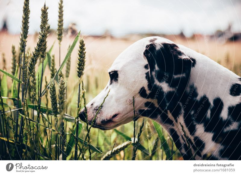 Dog Nature Plant Summer Calm Animal Environment Warmth Spring Natural Happy Horizon Contentment Field Observe Friendliness