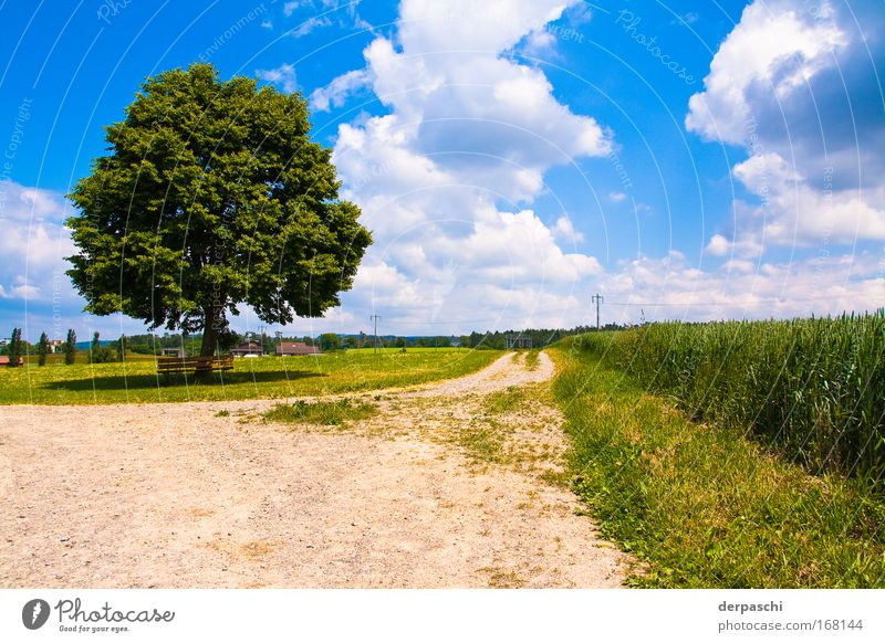 break? Colour photo Exterior shot Deserted Day Shadow Contrast Sunlight Wide angle Calm Summer Nature Landscape Sky Clouds Beautiful weather Tree Grass