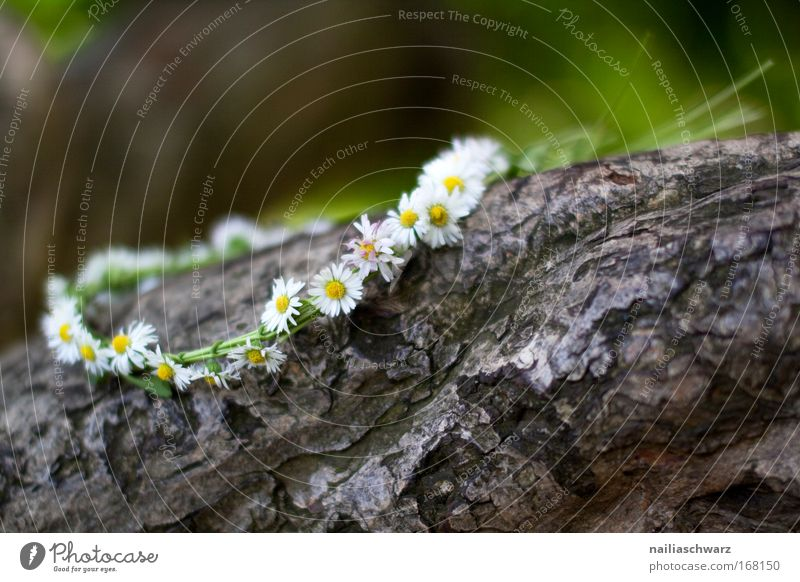 Nature Beautiful Old White Tree Flower Green Plant Calm Yellow Blossom Grass Spring Wood Brown