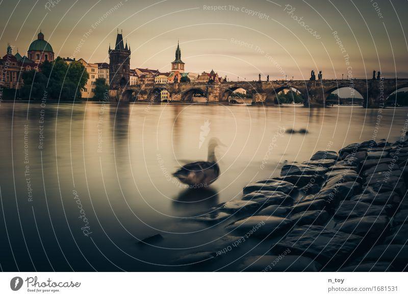 Město snů - Praha Summer River bank Town Capital city Bridge 1 Animal Movement To enjoy Dark Historic Emotions Beautiful Caution Patient Calm Culture