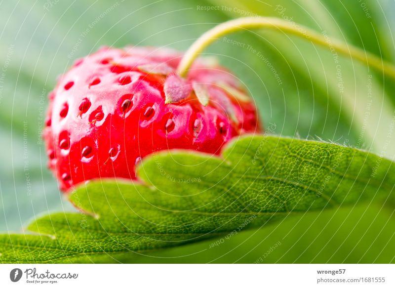 Summer Green Red Leaf Healthy Food Fruit Fresh Nutrition Sweet Vegetarian diet Strawberry Juicy