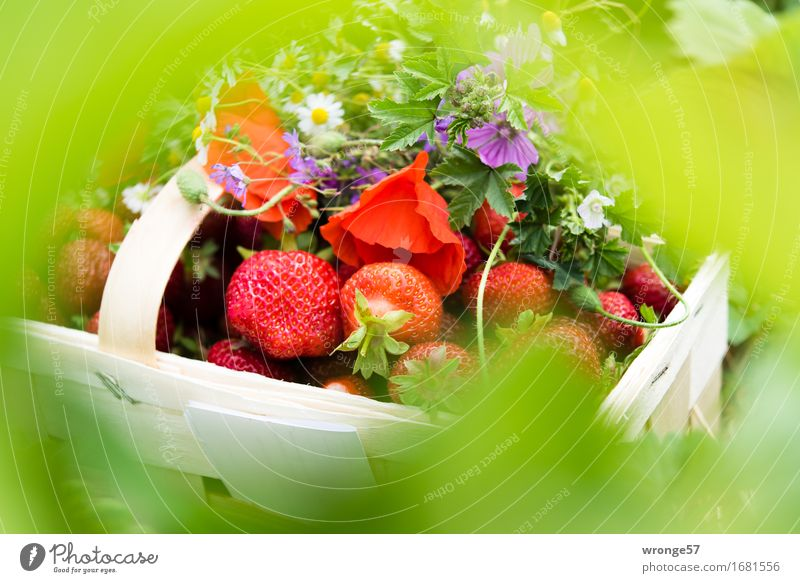 Summer Green White Red Healthy Food Fruit Fresh Violet Delicious Bouquet Vegetarian diet Strawberry Basket Meadow flower Arranged