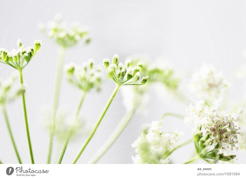 Nature Plant Summer Green White Environment Emotions Spring Natural Garden Bright Design Contentment Field Growth Decoration