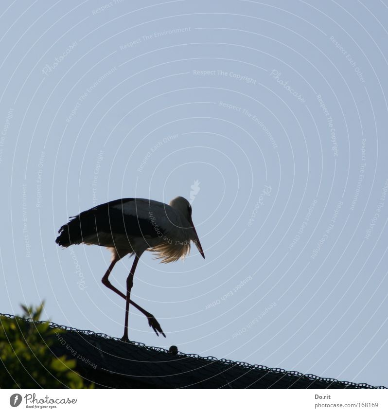 Freedom Landscape Bushes Beautiful weather Wire Birth Pride Stride Stork Midwife Reet roof White Stork