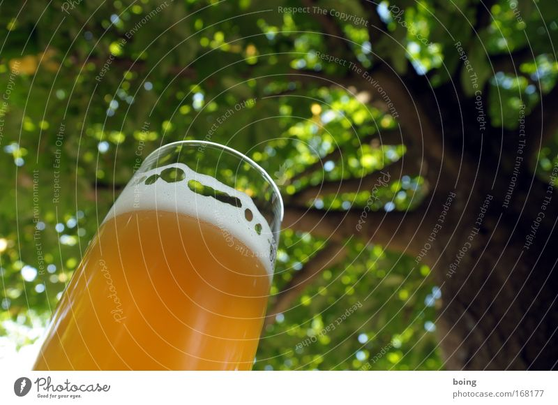 Nature Summer Calm Relaxation Spring Garden Park Leisure and hobbies Beverage Protection Beer Beautiful weather Event To enjoy Alcoholic drinks Terrace
