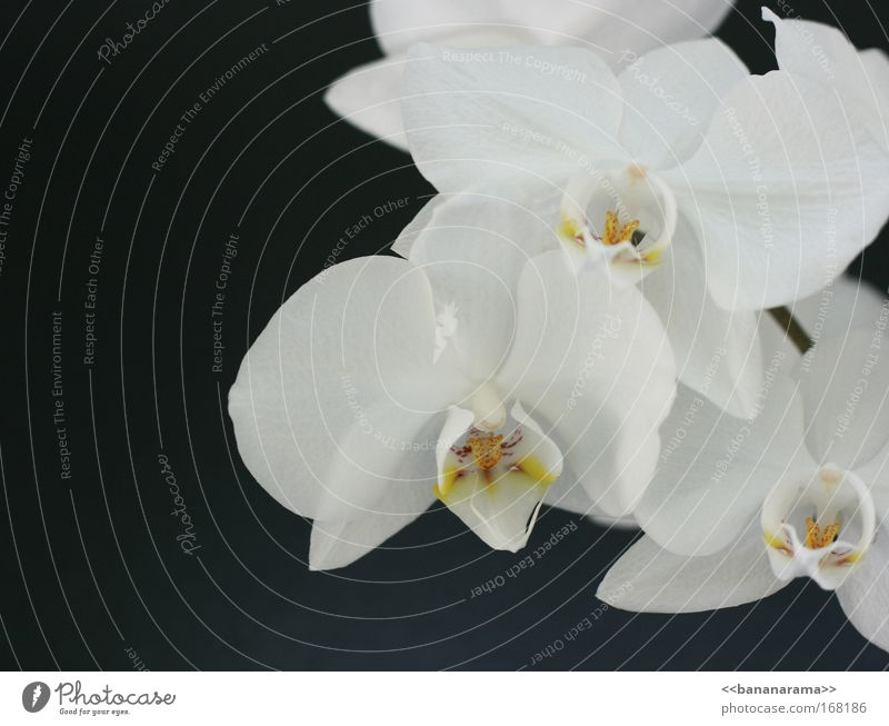 Many thanks for the flowers Colour photo Close-up Detail Copy Space left Copy Space bottom Day Front view Style Beautiful Wellness Nature Plant Flower Orchid