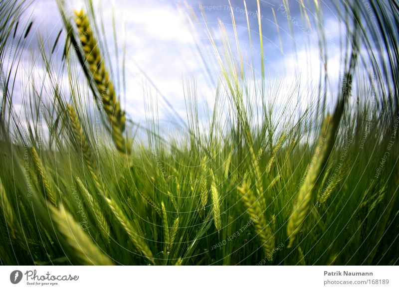 Nature Sky Green Blue Plant Summer Clouds Grass Spring Warmth Landscape Field Weather Large Grain Esthetic