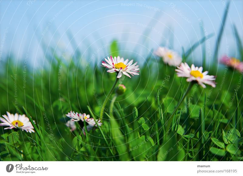 Sky Nature Blue Plant Beautiful Green White Summer Flower Calm Environment Life Meadow Grass Spring Natural