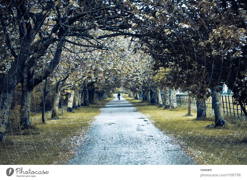 in the vanishing point Colour photo Exterior shot Day Central perspective Environment Landscape Tree Park Cycling Street Lanes & trails Going Deciduous tree