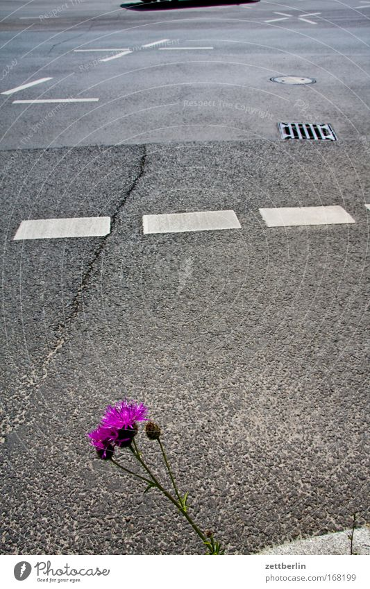 Plant Summer Street Blossom Sadness Road traffic Transport Growth Transience Signage Distress Traffic infrastructure Concern Crossroads Fear of the future