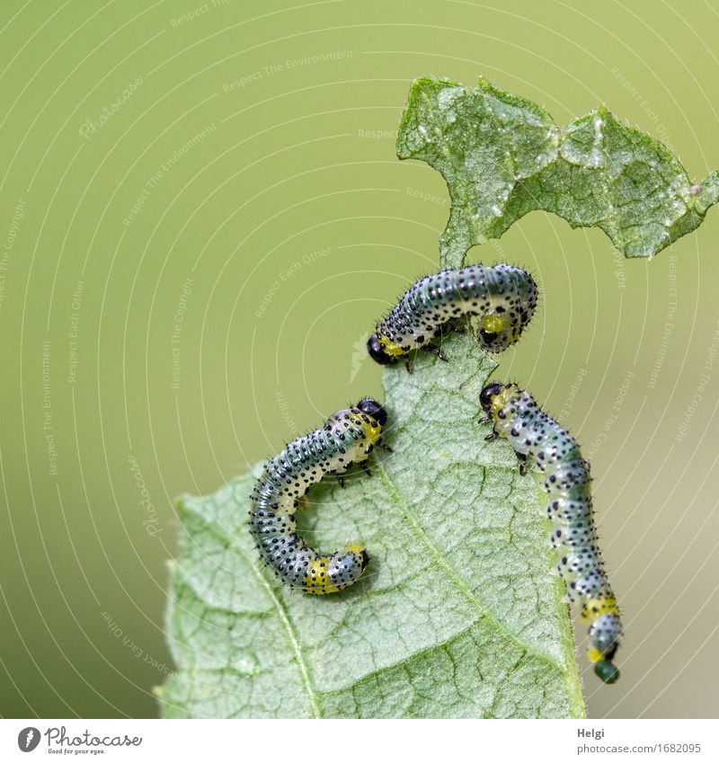 there they are again... Environment Nature Plant Animal Leaf Agricultural crop Garden Wild animal Caterpillar 3 Crawl Authentic Together Uniqueness Small
