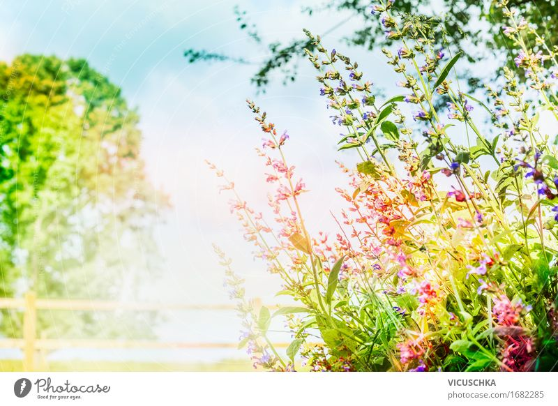 Garden or park background with pink flowers and sunlight Lifestyle Design Summer Environment Nature Landscape Plant Sky Sunlight Spring Autumn Beautiful weather