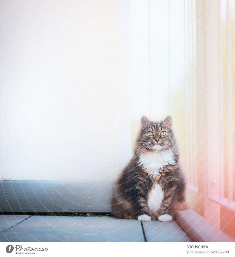 Cat on balcony Lifestyle Living or residing Wall (barrier) Wall (building) Balcony Terrace Animal Pet 1 Nature Sit Exterior shot Colour photo Copy Space top