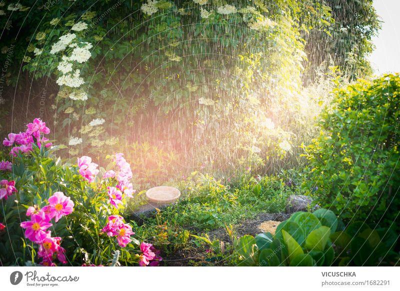 Rain with sunlight in the summer garden Lifestyle Design Summer Garden Nature Landscape Plant Sunrise Sunset Sunlight Spring Beautiful weather Flower Grass