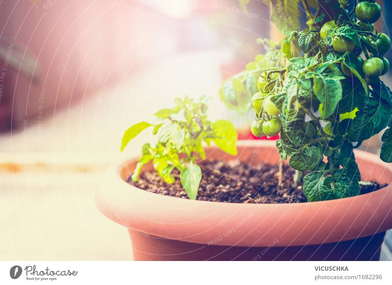 Growing vegetables in tubs on balcony Food Vegetable Lifestyle Healthy Eating Summer Living or residing Flat (apartment) Garden Nature Sunrise Sunset Sunlight