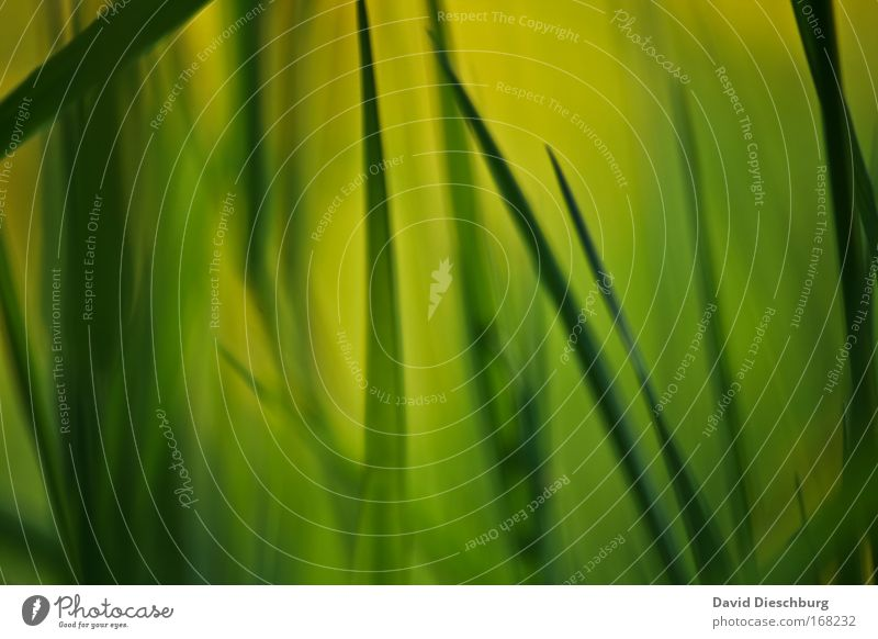 Nature Green Plant Environment Dark Grass Bright Background picture Macro (Extreme close-up)