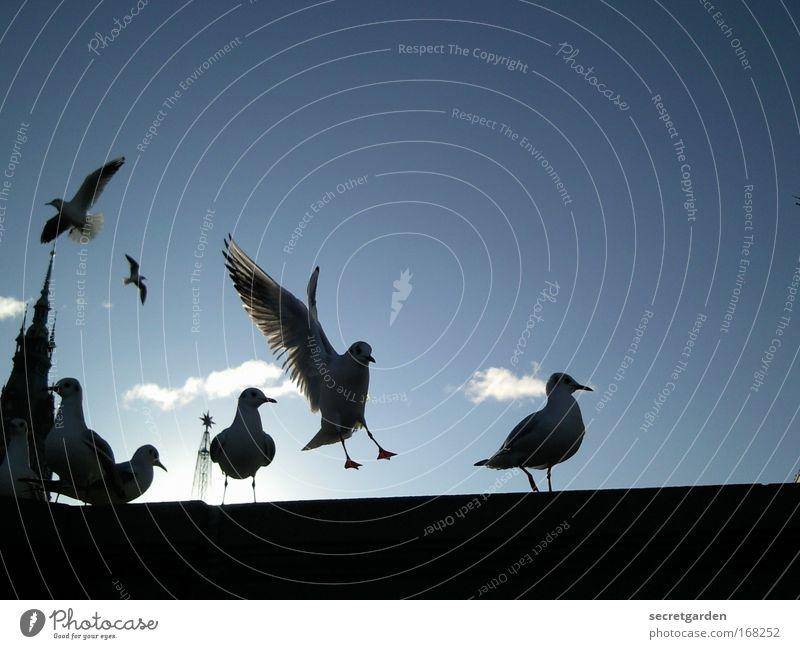 Blue Black Dark Cold Wall (building) Wall (barrier) Bird Power Elegant Wait Flying Church Bridge Wing Threat Group of animals