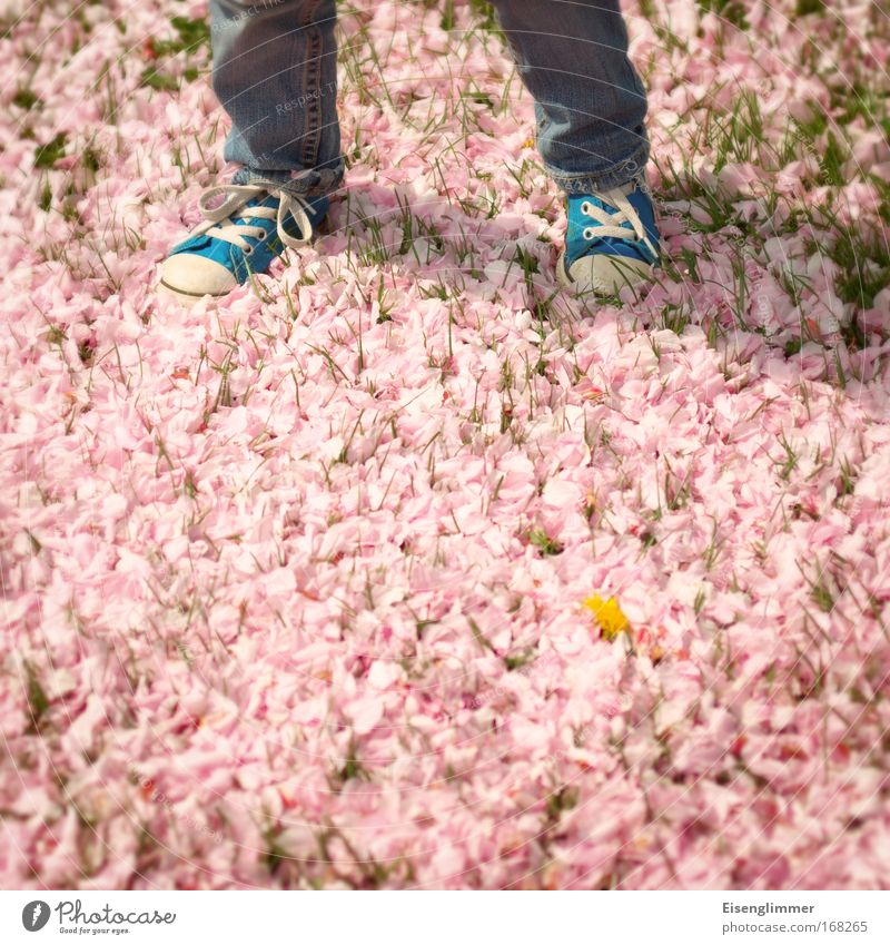 [HH 04.09] Flower photography Infancy Legs 3 - 8 years Child Sunlight Spring Blossom Sneakers Stand Wait Blue Pink Independence Future Going Step-by-step