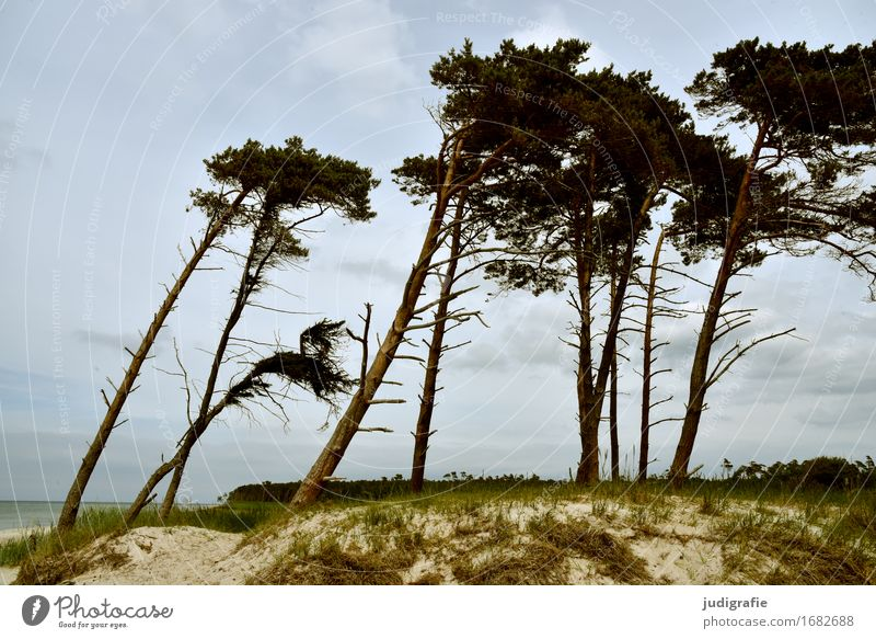 western beach Environment Nature Landscape Plant Sky Clouds Climate Weather Wind Gale Tree Coast Baltic Sea Fischland-Darss-Zingst Western Beach Exceptional