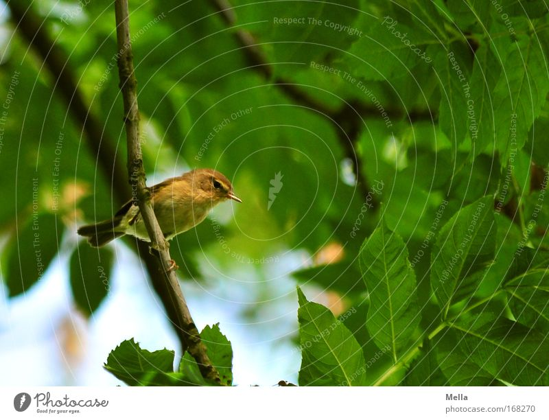 Nature Tree Green Plant Summer Leaf Animal Spring Bird Small Environment Free Sit Natural To hold on Wild animal