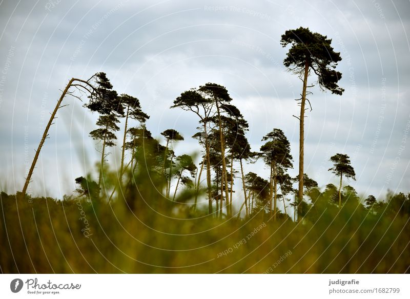 western beach Environment Nature Landscape Plant Sky Clouds Climate Weather Wind Tree Forest Coast Baltic Sea Fischland-Darss-Zingst Western Beach Cold Natural