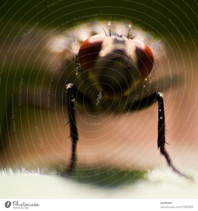 Nature Red Black Animal Fly Sit Animal face Disgust