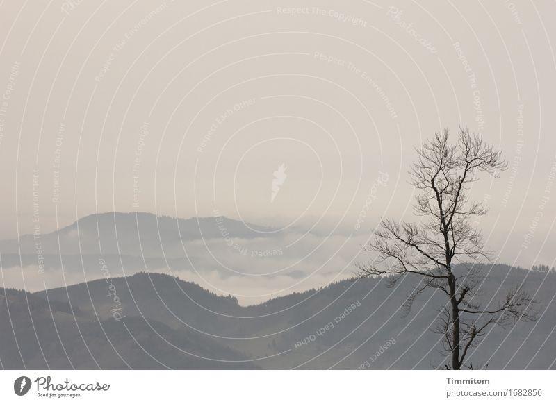 Sky Nature Plant Tree Landscape Clouds Calm Mountain Environment Emotions Natural Contentment Fog Esthetic Soft Hill