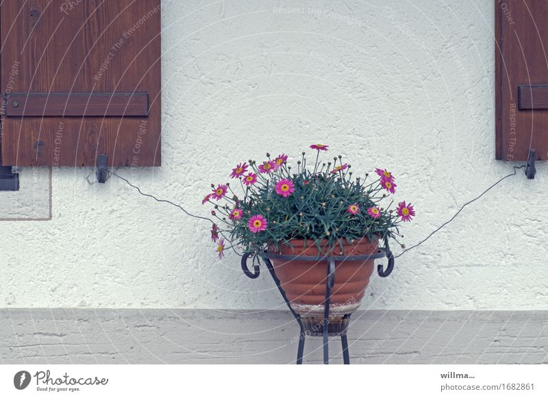 affection Flowerpot Shutter Wall (building) Wire Safety Attach doubly secured Collateralization Plant Rural Colour photo Exterior shot
