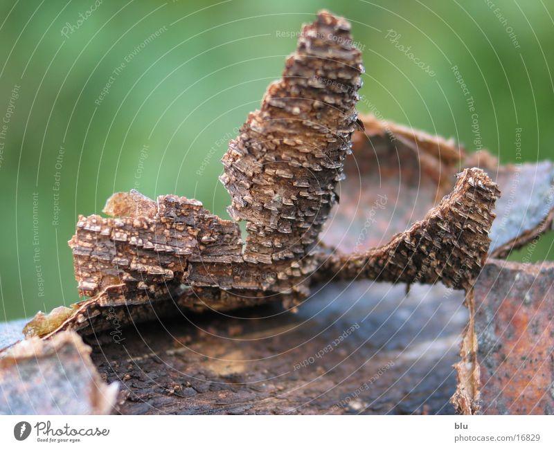 Tree Wood Dry Tree bark