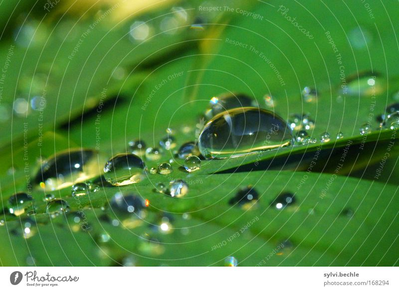 Nature Water Beautiful Green Plant Calm Leaf Cold Rain Glittering Weather Wet Drops of water Fresh Multiple Drop
