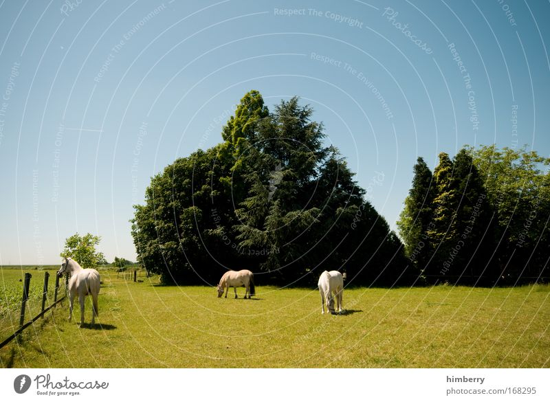 Nature Tree Green Blue Plant Summer Animal Meadow Grass Spring Landscape Field Large Horse Kitsch Idyll