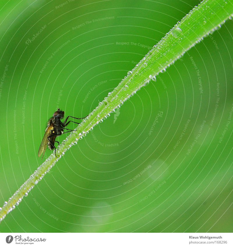 Nature Green Plant Animal Spring Wait Small Fly Environment Drops of water Rope Sit Common Reed Lakeside Pond