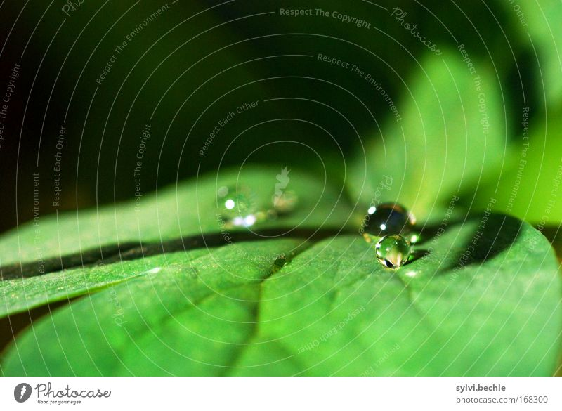Nature Beautiful Green Plant Calm Leaf Black Cold Rain Glittering Small Weather Wet Drops of water Fresh Round