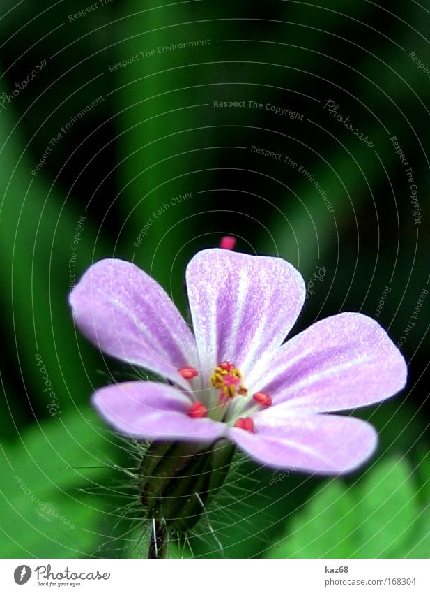 in the wood Nature Plant Spring Summer Flower Blossom Fragrance Violet Green Field Blossoming Growth kaz68 Meadow Idyll Wild plant Park Esthetic Grass tart Blur