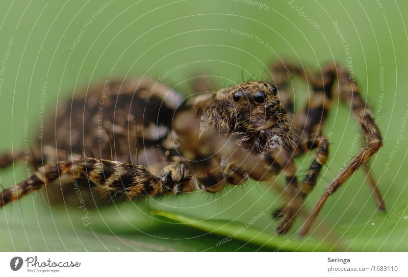 Model job of a spider Landscape Plant Tree Flower Grass Bushes Moss Leaf Garden Park Meadow Forest Animal Wild animal Spider Animal face 1 Crawl Spider's web