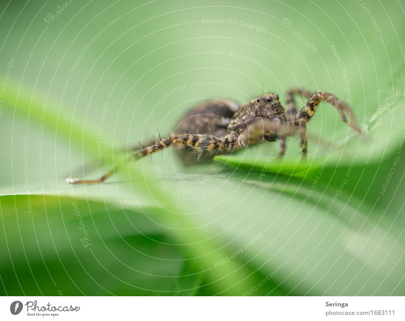 She's... crazy. Plant Animal Grass Leaf Blossom Garden Park Meadow Forest Wild animal Spider Animal face 1 Hunting Insect Jumping spider Colour photo