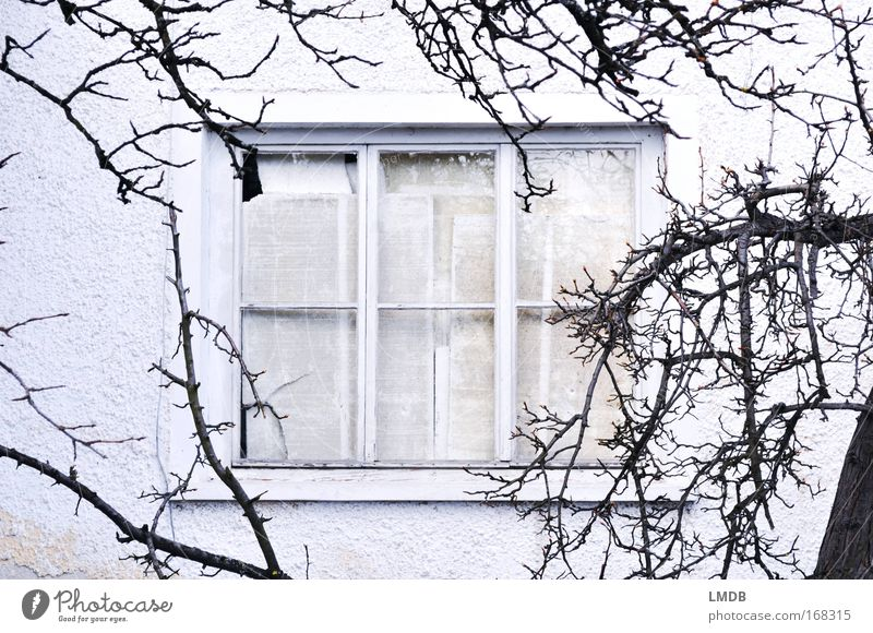 Old White Winter House (Residential Structure) Black Wall (building) Window Gray Sadness Going Poverty Closed Grief Newspaper Simple Branch