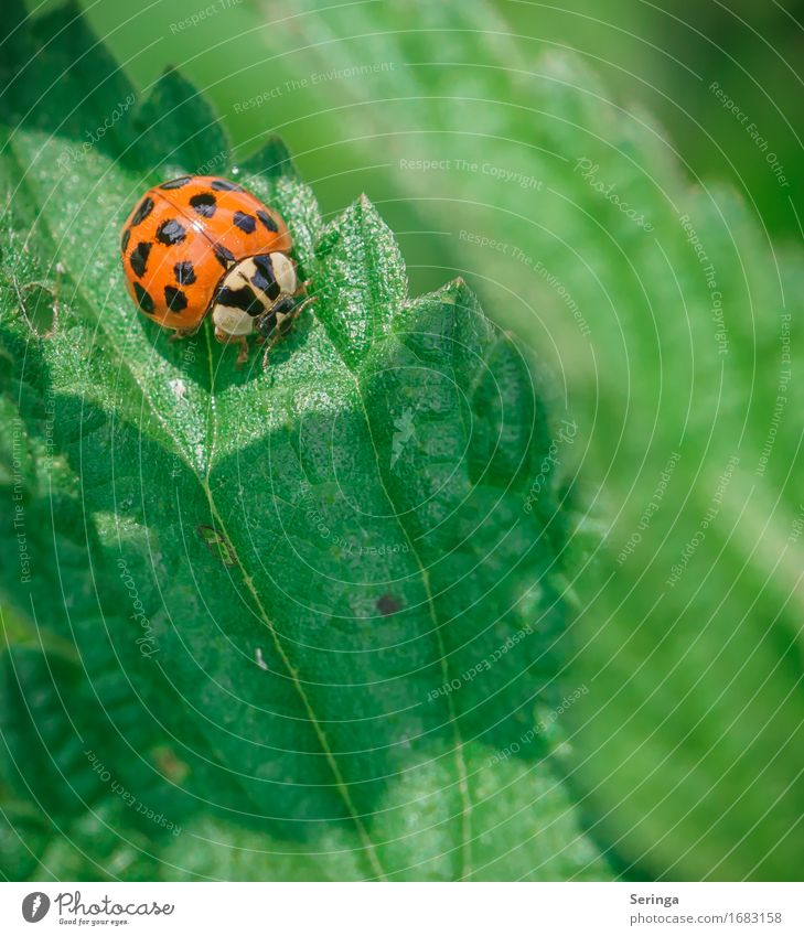 13 points Environment Nature Plant Animal Flower Bushes Moss Leaf Wild plant Garden Park Meadow Forest Wild animal Beetle Animal face Wing Flying Ladybird
