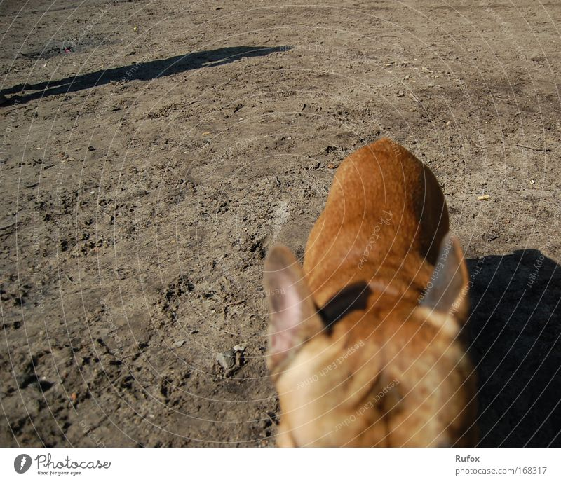 Dog Beautiful Sun Summer Beach Animal Black Gray Sand Coast Brown Elegant Hiking Back Threat Pelt