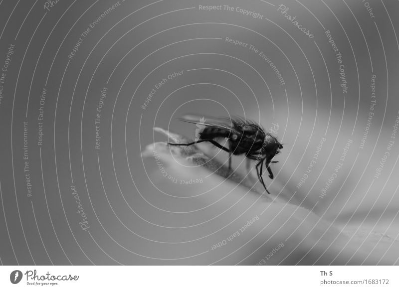 Nature Plant Summer White Leaf Calm Animal Black Spring Natural Gray Elegant Fly Esthetic Authentic Uniqueness