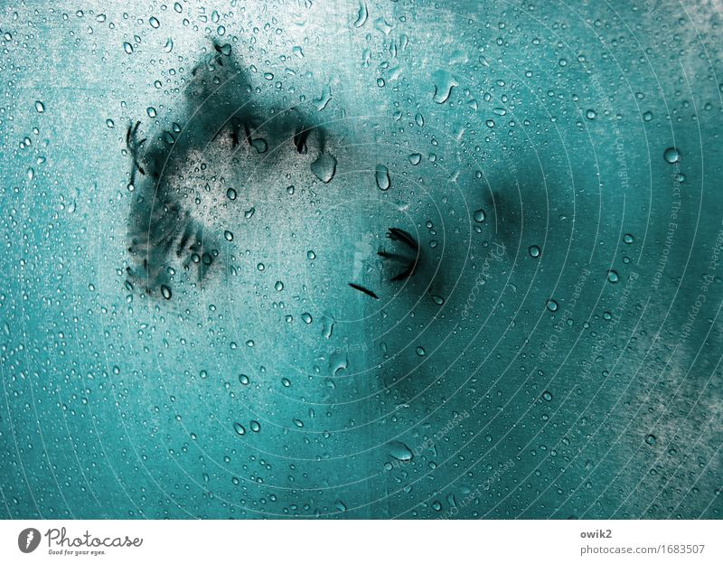 rainy day Water Drops of water Rain Twig Coniferous trees Fir needle Umbrella Plastic Authentic Small Near Wet Turquoise Serene Patient Protection Cloth Touch