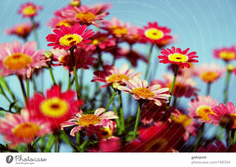 a bouquet of colourful Plant Beautiful weather Flower Blossom Daisy Park Meadow Exceptional Fragrance Exotic Friendliness Happiness Happy Kitsch Funny Positive