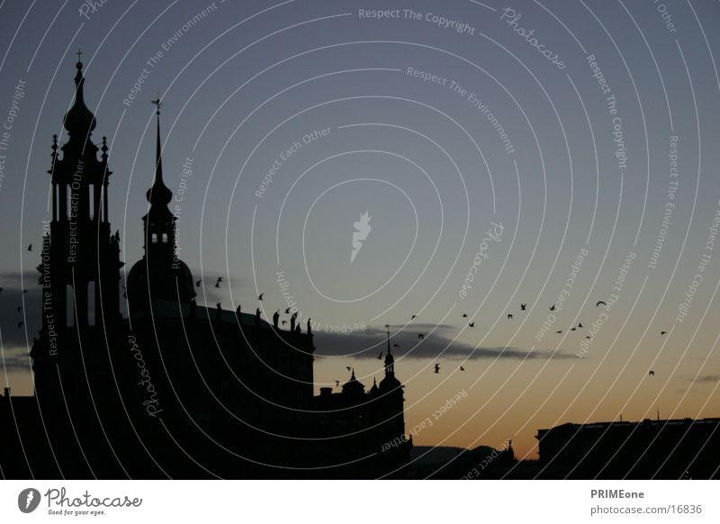 Bird Architecture Dresden Saxony Hofkirche