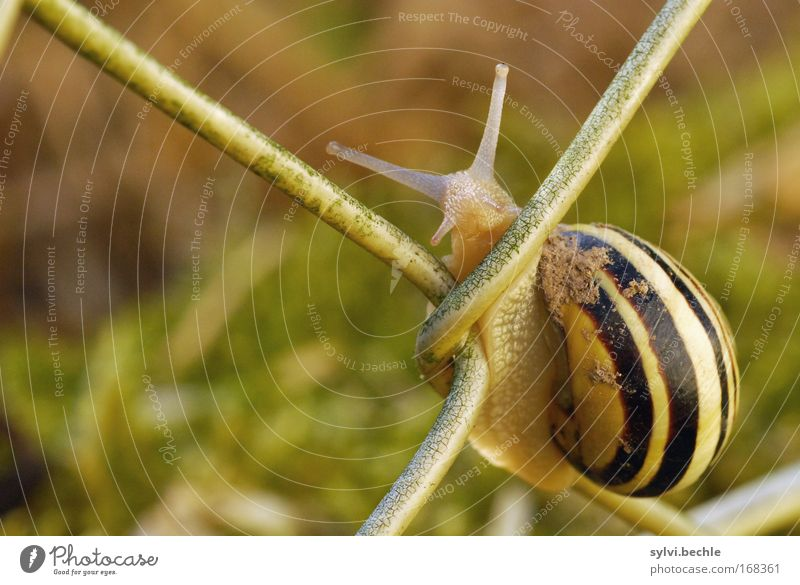 are you looking? Nature Summer Garden Animal Snail 1 To hold on Looking Dirty Curiosity Cute Effort Break Contentment Striped Graceful Slowly Fence Climbing