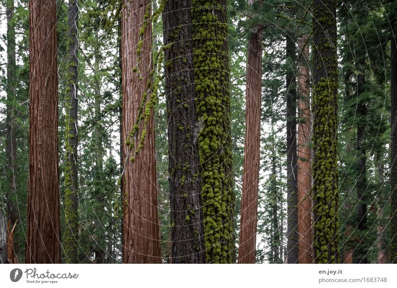 Nature Plant Green Tree Landscape Calm Forest Environment Life Brown Together Growth Climate Uniqueness Hope Grief