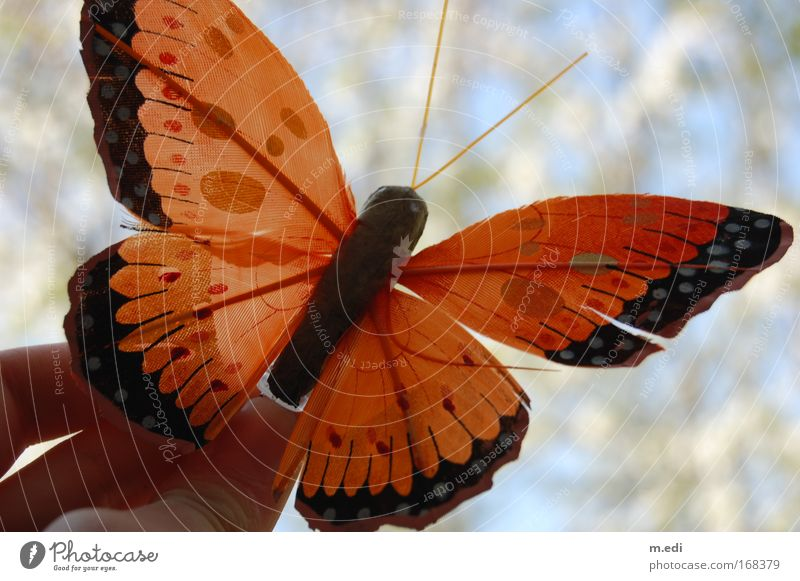 Butterfly you little thing... Colour photo Day Environment Nature Plant Foliage plant 1 Animal Flying