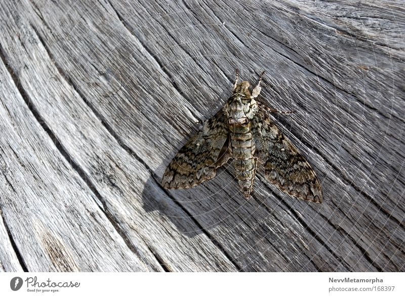 Beach Wing Butterfly Tree trunk Camouflage